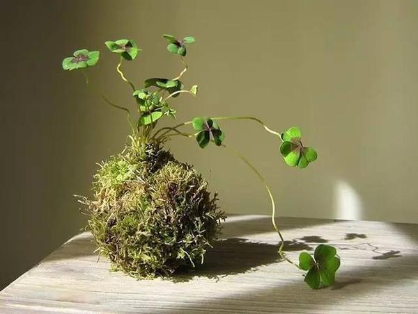 Красота хрупкости, изменчивости и непостоянства. Фото с сайта doc.sanwenba.com