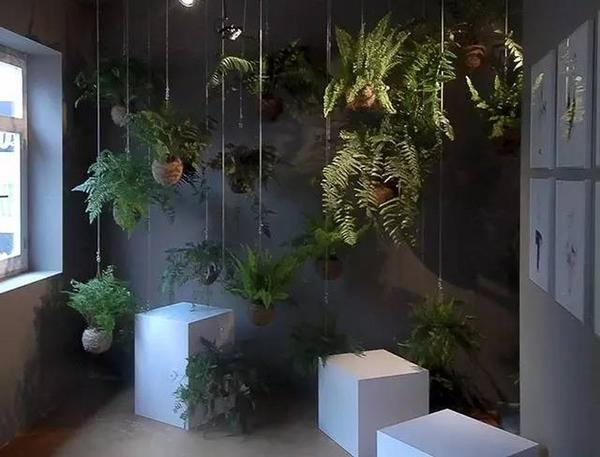 Висячий сад из кокэдама. Фото с сайта doc.sanwenba.com