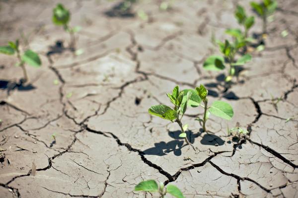 Климатические аномалии осложняют растениям жизнь