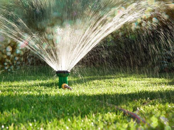 Полив газона в засушливую погоду обязателен