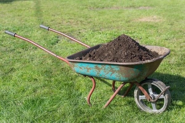 Раз в два года удобряем газон органикой