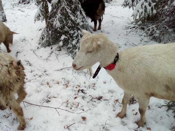 Мокрая Фея и мокрый GPS-трекер в снежный день