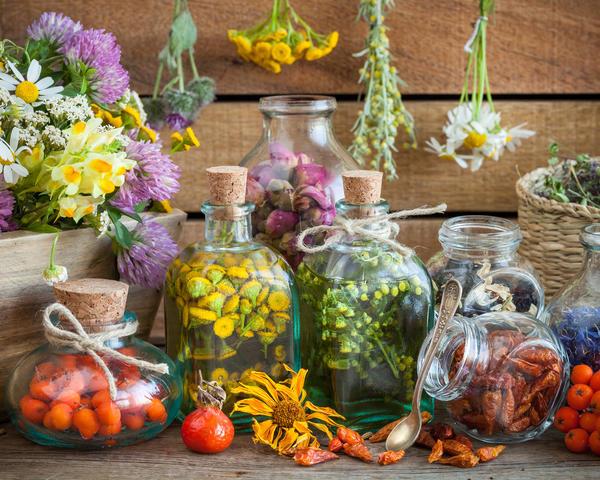Лекарственные травы заменят аптеку