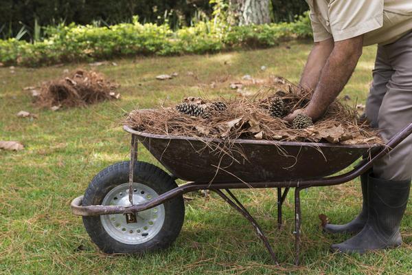 Поздней осенью почву в приствольном круге чубушника необходимо замульчировать