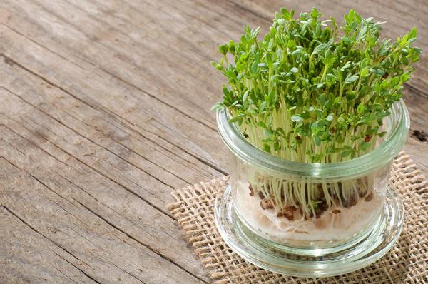 Вырастить кресс-салат по силам даже ребенку