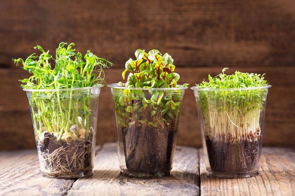 Микрозелень - полезные ростки