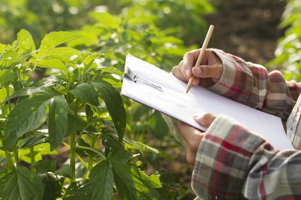 Внесение удобрений и подкормки нужно планировать