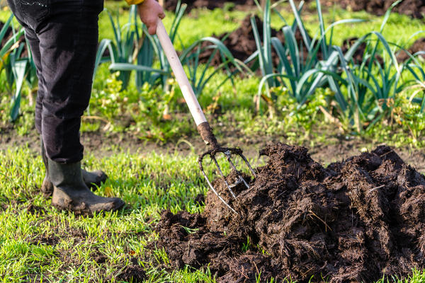 Длительное время в сельском хозяйстве использовались только органические удобрения и зола