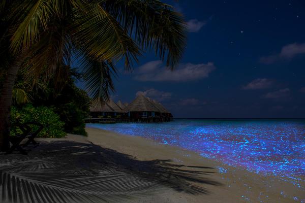 Светящийся от планктона океан