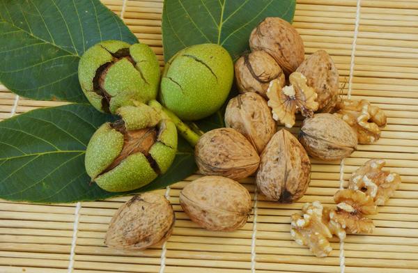 Ядра грецких орехов вкусны и очень полезны