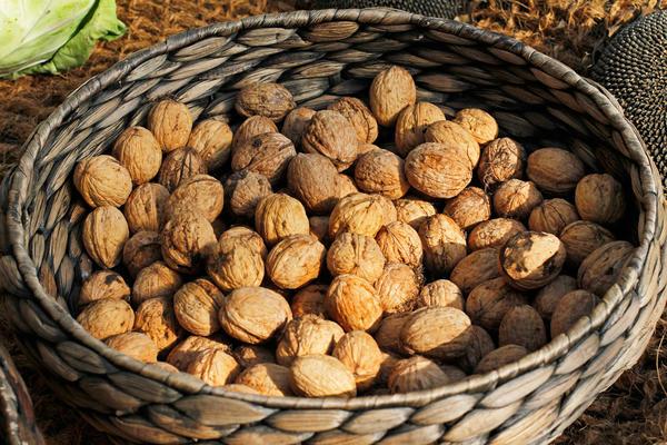 Орехи должны быть крупными, без повреждений