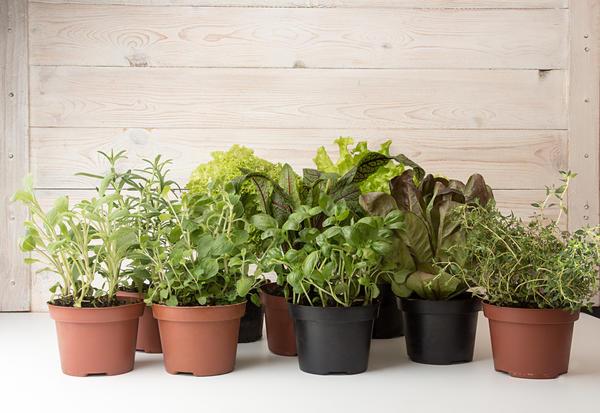 Растения можно сажать в обычные пластиковые горшки или другие подходящие емкости