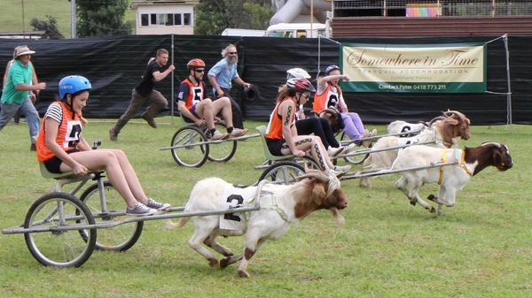 Заезды на козлах. Фото с сайта camdencourier.com.au
