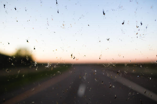 Феномен лобового стекла