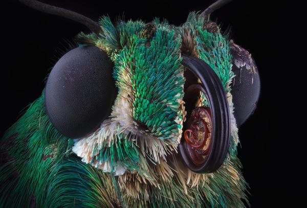 Исчезновение насекомых может быть симптомом очередного массового вымирания на нашей планете