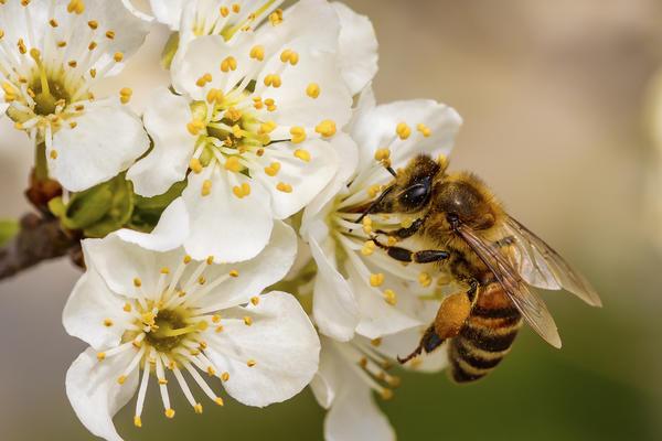 Более 80 % растений опыляются насекомыми