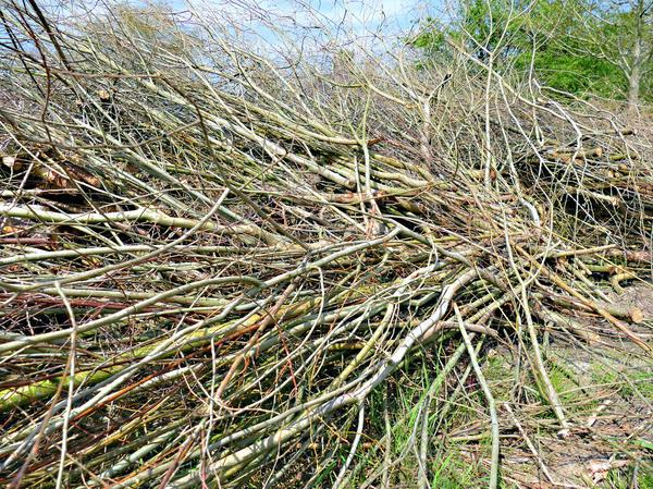 Дачники обязаны содержать в чистоте полосу в 10 метров между границей своего участка и лесом