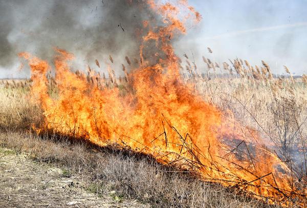 Профилактика пожаров - забота дачника