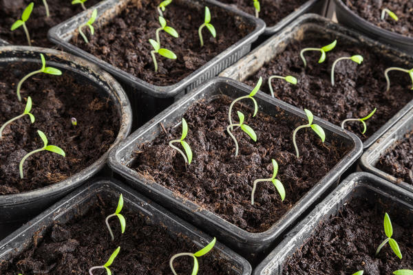 Растения тянутся к свету, поэтому надо обеспечить им оптимальную освещенность