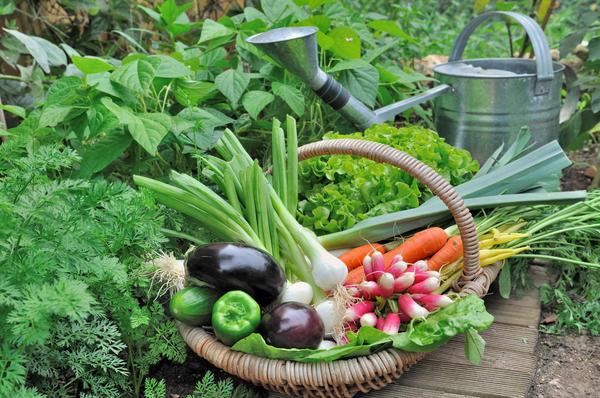 Экзамены будет принимать огород, щедро наградив отличников урожаем