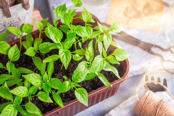 Необходимо содержать растения так, чтобы они ни в чём не нуждались