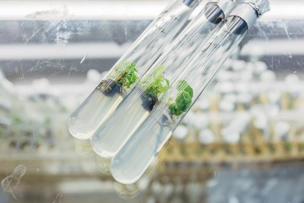 In vitro: растение из пробирки