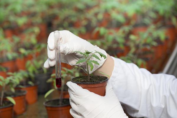 Нужно понимать, как тот или иной фитогормон подействует на растение