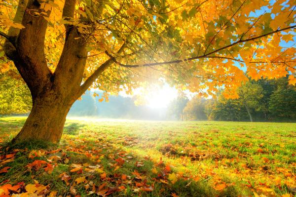 Пожелтение листьев под действием цитокининов и этилена