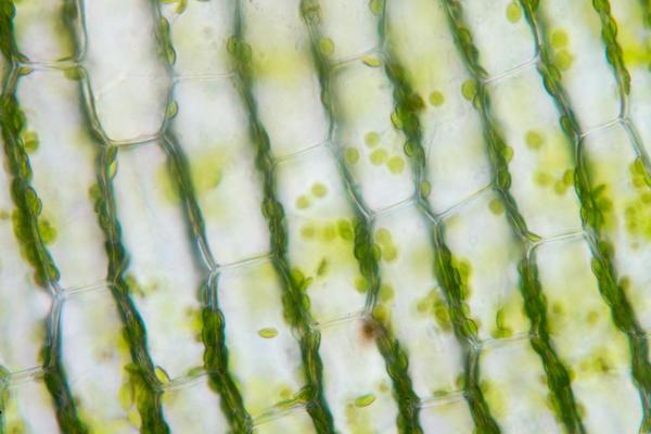 Фитогормоны регулируют многие процессы в жизни растения
