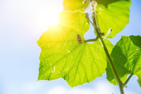 Биологически активные вещества оптимизируют обменные процессы растения