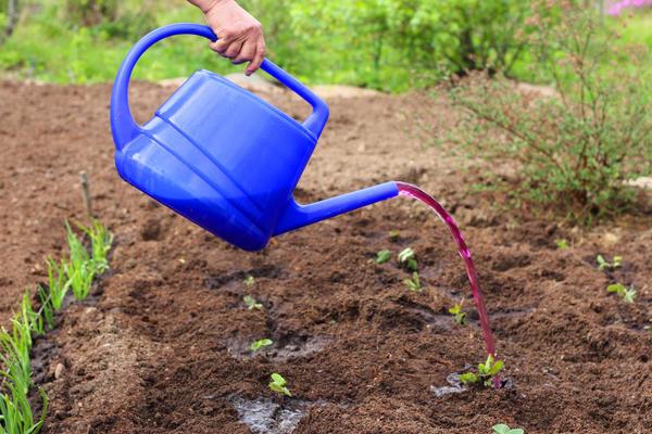 Горячий раствор перманганата калия - отличное средство для обеззараживания почвы