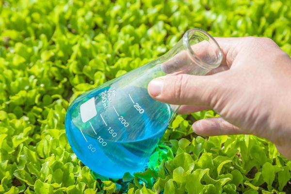 Порошок медного купороса сначала растворяют в небольшом количестве горячей воды, а затем выливают в общую емкость