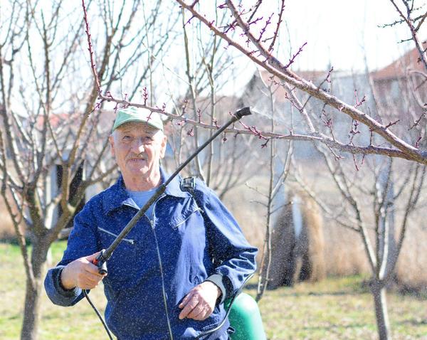 Ранневесенняя обработка сада от вредителей