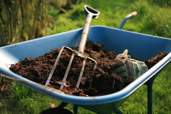 Ранней весной необходимо внести под кусты перегной или компост