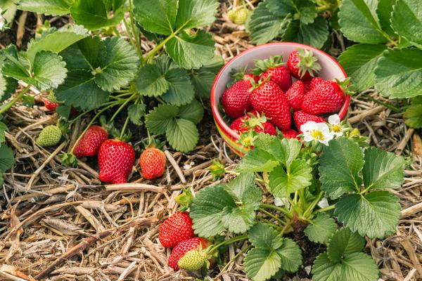 Мульчирование поможет получить отличный урожай