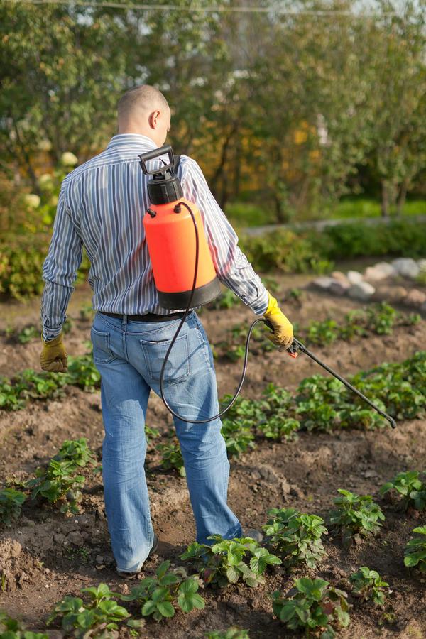 Своевременные обработки от болезней и вредителей сохранят здоровье растений