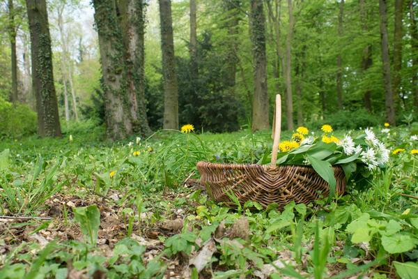 Какие лекарственные растения заготавливают в мае?