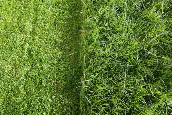От ширины захвата будет зависеть, насколько оперативно вы закончите стрижку лужайки