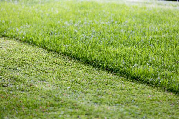 Идеальный газон = регулярная стрижка