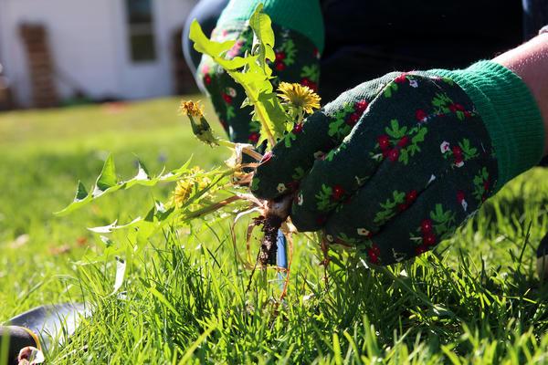 Прополка - одна из самых трудоёмких агротехнических операций