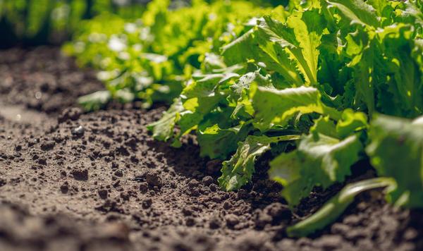 При капельном поливе почва не уплотняется