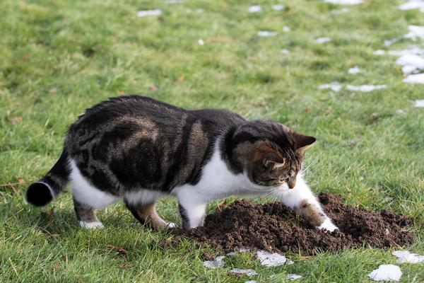 Коты - прирожденные охотники
