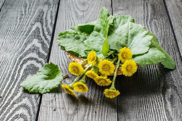 У мать-и-мачехи лекарственным сырьем служат листья, реже - цветки