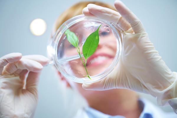 Учёные научились управлять развитием растения