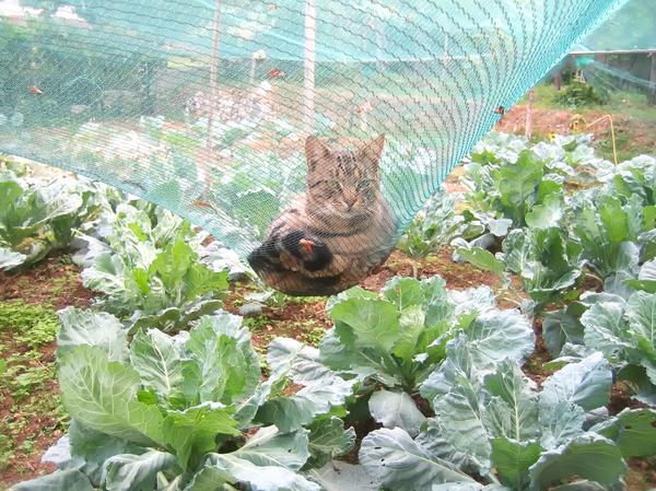 Вы защитили овощи от вредителей сеткой? Кошка придумает свой способ использования