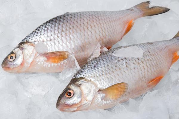 Замораживание рыбы требует соблюдения режима заморозки
