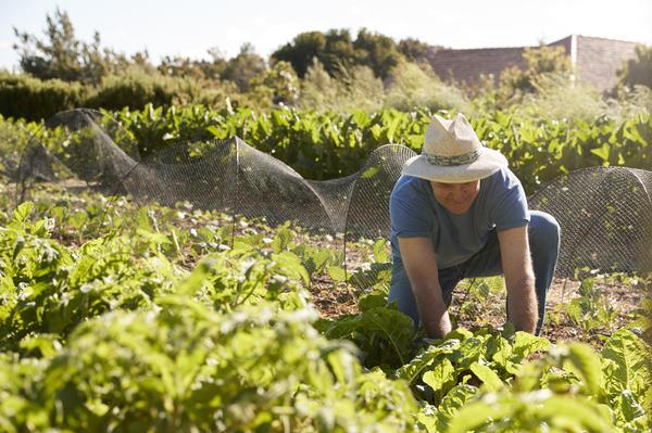Прополки и рыхление почвы могут отнимать много времени и сил