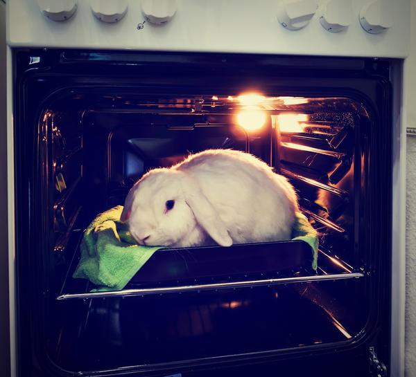 Есть ли права у кролика?