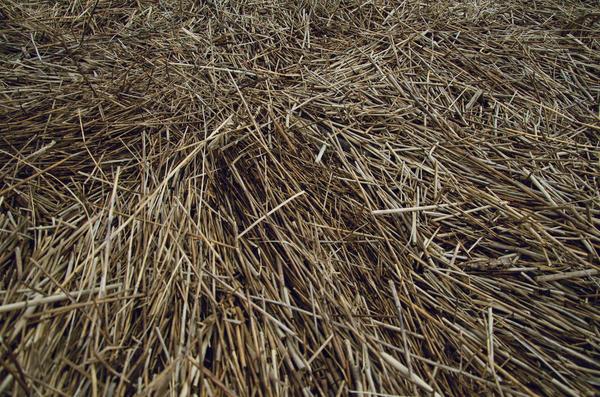Прелая солома - источник полезной сенной палочки