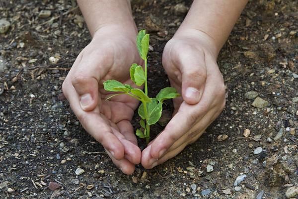 Поговорим о конкретных средствах, стимулирующих развитие надземной части растений